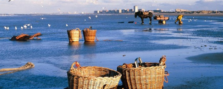 baskets_with_shrimps_oostduinkerke©D.de Kievith_crop1400x560_tcm24-7649.JPG